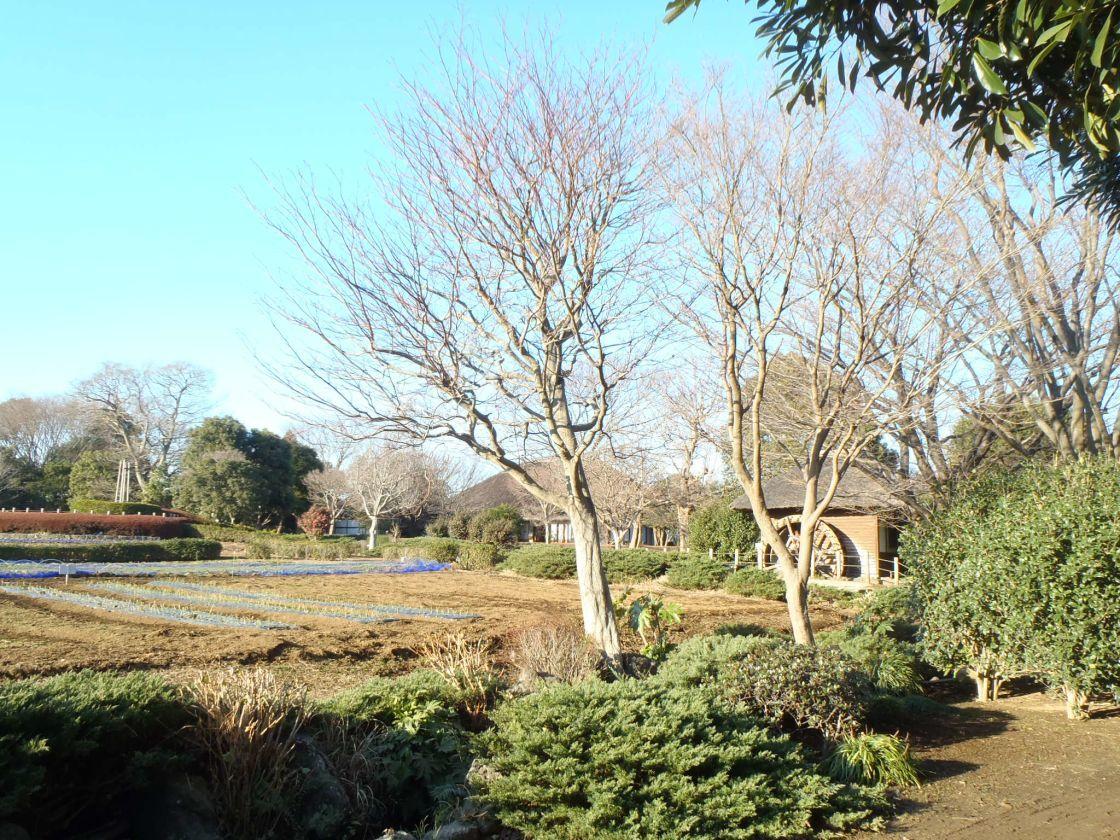 古民家、水車小屋、長屋門が配された、のどかな田園風景の一画にある会議室(千葉市ふるさと農園) の写真0