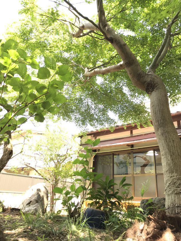 【オープン価格キャンペーン!予約受付中】1日1組限定!昭和レトロな趣を残す築60年の古民家を貸し切ろう! のカバー写真