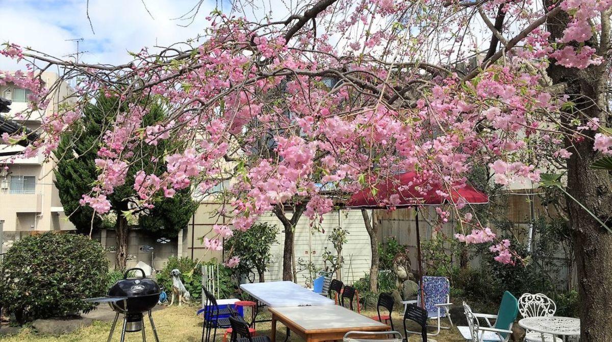【お花見穴場スポット】桜の見えるレンタルスペースまとめ