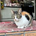 Kenta Ohkubo